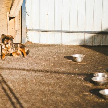 приют для собак, химки-2, приют химки-2, приют в химках