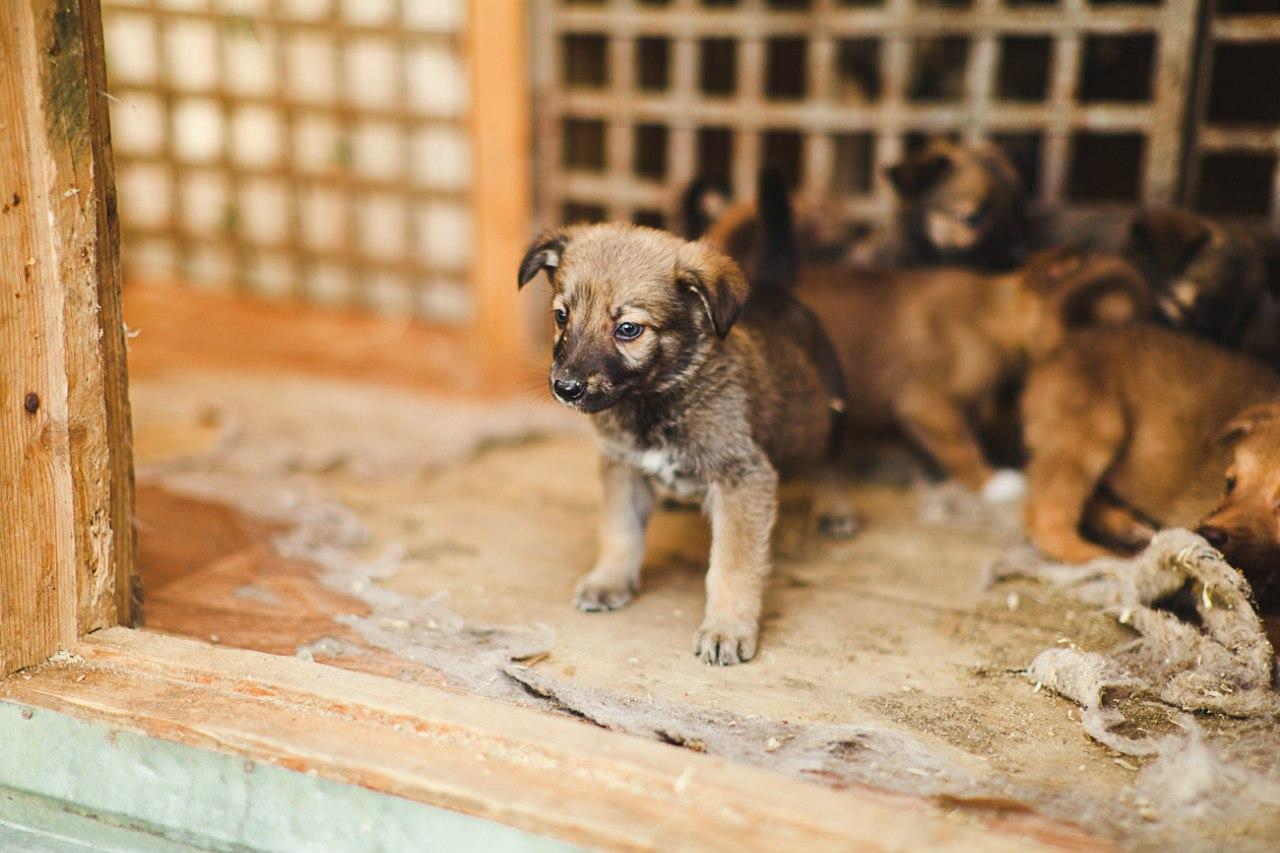Взять щенка из приюта в челябинске